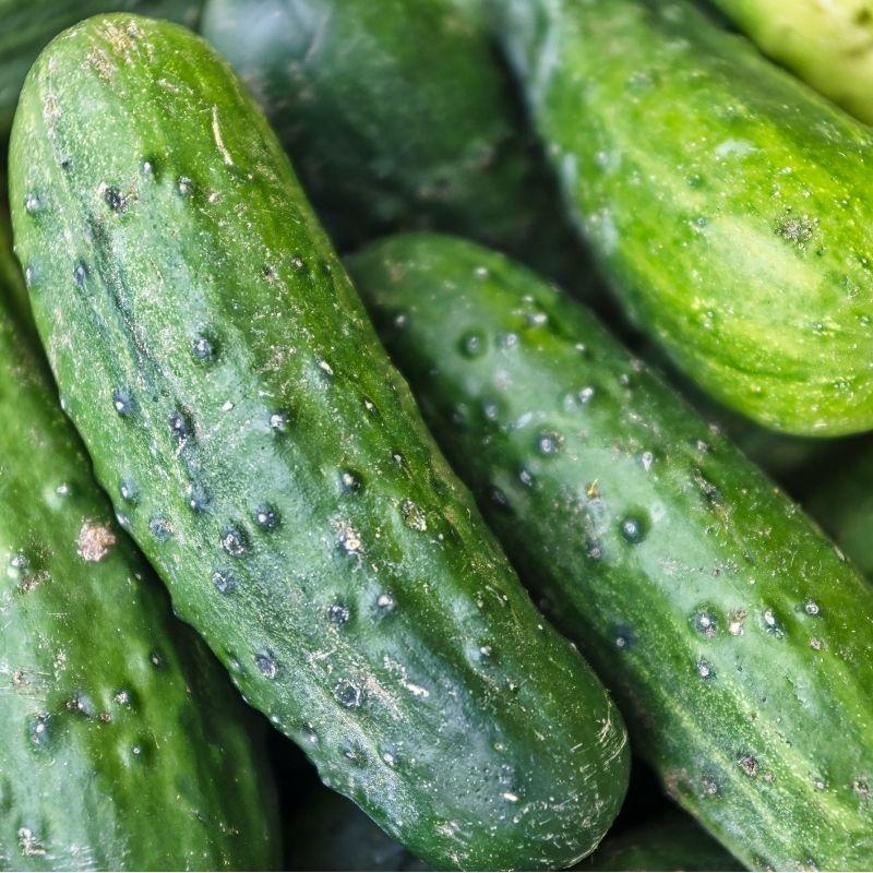 Cucumber 'Bush Pickle'