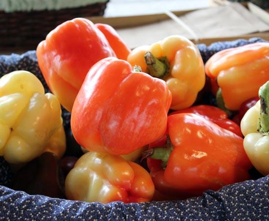 Pepper 'Valencia Orange'