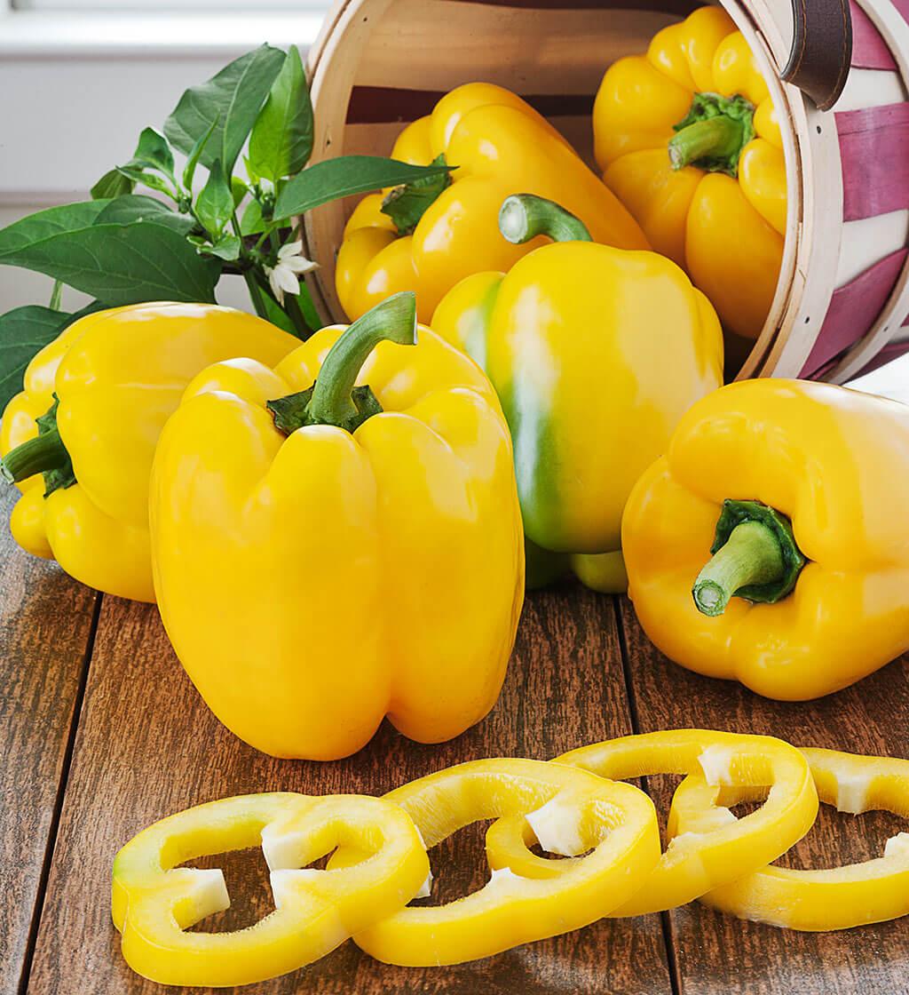 Pepper 'Yellow Bell'