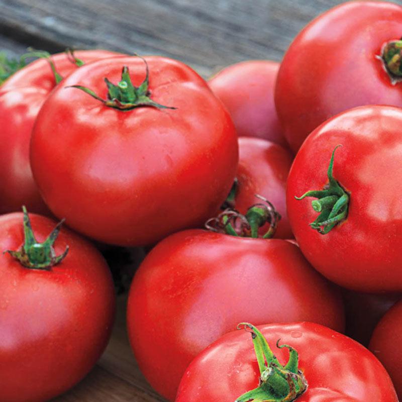 Tomato 'Better Boy'