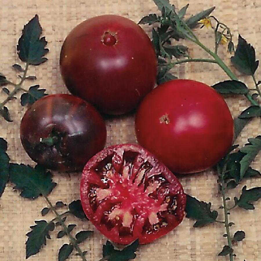 Tomato 'Black Krim'