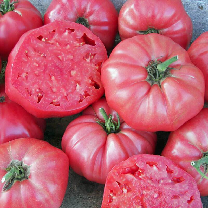 Tomato 'Brandywine Pink'