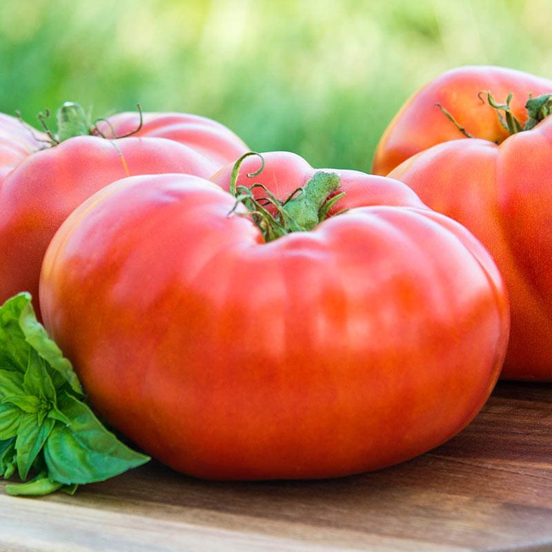 Tomato 'Brandywine Red'