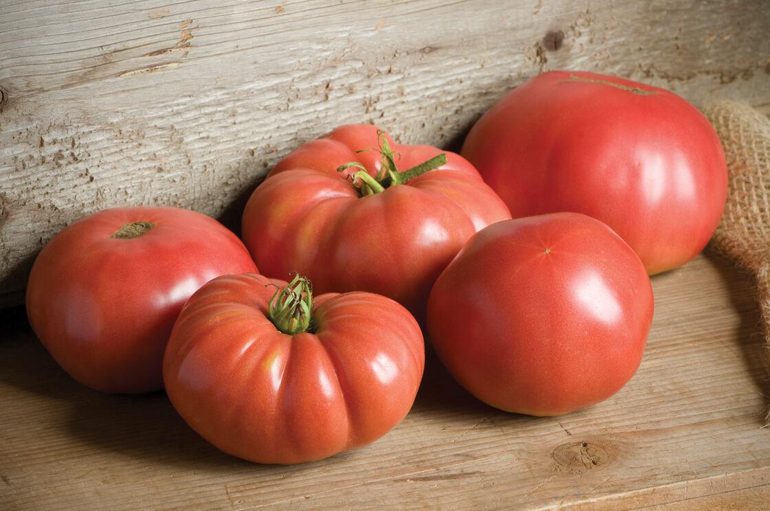 Tomato 'German Johnson'