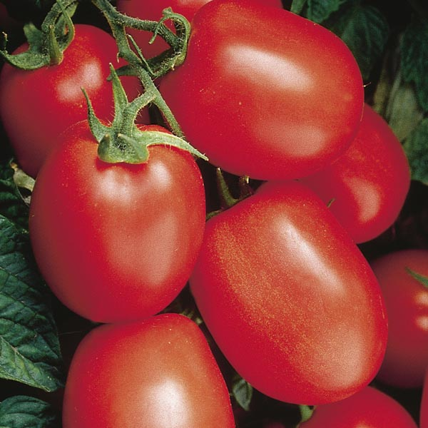 Tomato 'Health Kick'
