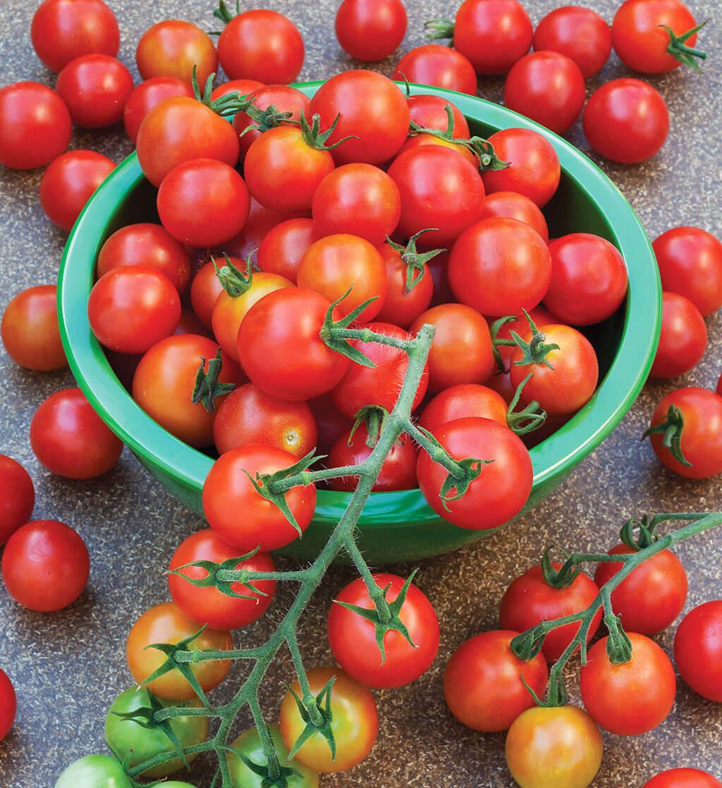 Tomato 'Sweet 100'