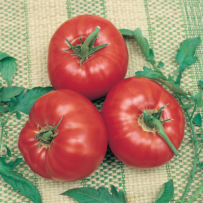 Tomato 'Whopper'